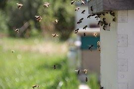 bees-826626__180